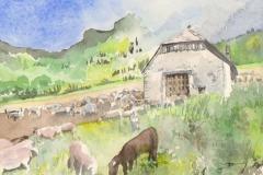 Bergerie-et-moutons
